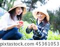 เกษตรกรรม,ผัก,ชาวนา 45361053