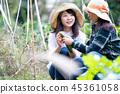 ผัก,ชาวนา,มะเขือเทศ 45361058