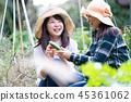 ชาวนา,ผู้หญิง,หญิง 45361062
