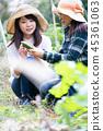 เกษตรกรรม,ผัก,ชาวนา 45361063