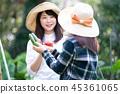 เกษตรกรรม,ผัก,ชาวนา 45361065