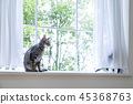 베이에서 노는 두 마리의 고양이 45368763