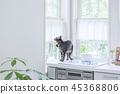 주방을 타고 바라 보는 고양이 45368806
