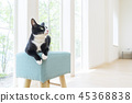 의자 위에서 바라 보는 고양이 45368838