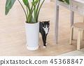 화분 옆의 고양이 45368847