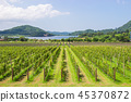 Grape farm and garden at near lake and mountain. 45370872