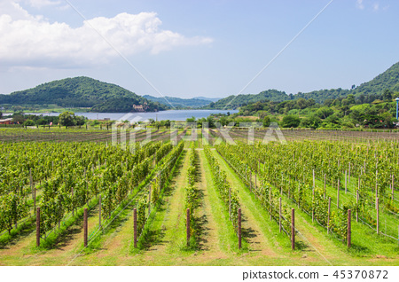 Grape farm and garden at near lake and mountain. 45370872