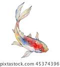 Isolated goldfish illustration element. Watercolor set. Aquarelle elements for background, texture 45374396