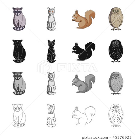 Raccoon, animal, cat, and other web icon in cartoon style.Nature, zoo, reserve, icons in set 45376923