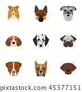 animal, different, dog 45377151