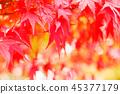 生动地变成红叶的Kaede 45377179