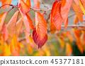 叶子颜色鲜艳 45377181