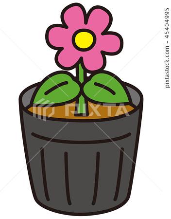 꽃 모종 45404995
