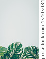 Tropical leaves Monstera on blue background with copyspace 45405084
