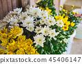 花朵 花卉 花 45406147