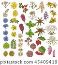 blossom, botanical, plant 45409419