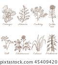 bloom, blossom, botanical 45409420
