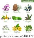 botanical, leaf, leaves 45409422