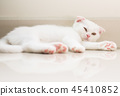 cat kitten cute 45410852