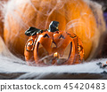 Halloween squash and candle. Spider net 45420483