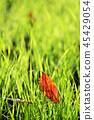 dead, leaves, autumnal 45429054