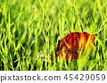 dead, leaves, autumnal 45429059