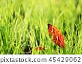 dead, leaves, autumnal 45429062