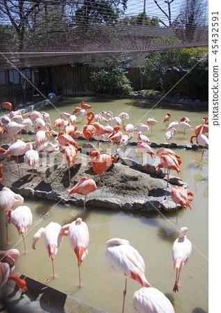 Flamingo at the Kobe City Oji Zoo 45432591