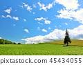 홋카이도 푸른 하늘의 대지와 크리스마스 트리 나무 45434055