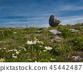 Flower meadow in front of a big rock in Ireland 45442487