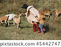 child kid goat 45442747