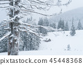 Snowy winter in a mountain forest 45448368