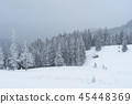 Snowy winter in a mountain forest 45448369