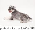 สุนัข,สุนัช,สัตว์ 45459089