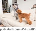 สุนัข,สุนัช,สัตว์ 45459485