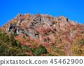Mt. 45462900