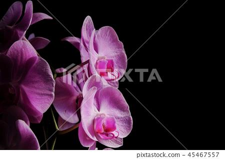 美麗的蘭花 45467557