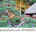 Autumn leaves 45468201