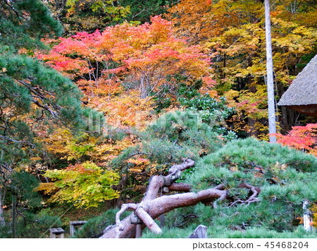 Autumn leaves 45468204