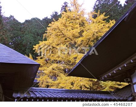 Autumn leaves 45468207