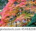 Autumn leaves 45468208