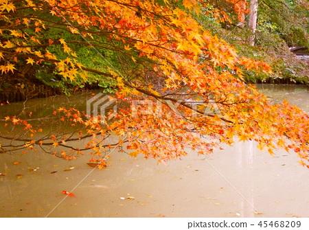Autumn leaves 45468209