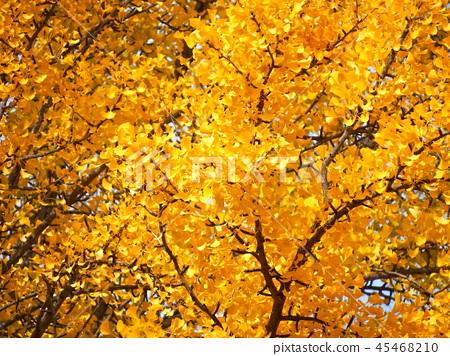 Autumn leaves 45468210