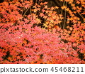 Autumn leaves 45468211