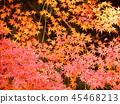 Autumn leaves 45468213