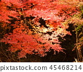 Autumn leaves 45468214