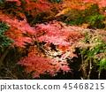 Autumn leaves 45468215