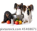 little dogs cooking 45468671