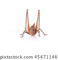 Grasshopper isolated on white background. 45471146