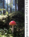 red fly agaric 45471783
